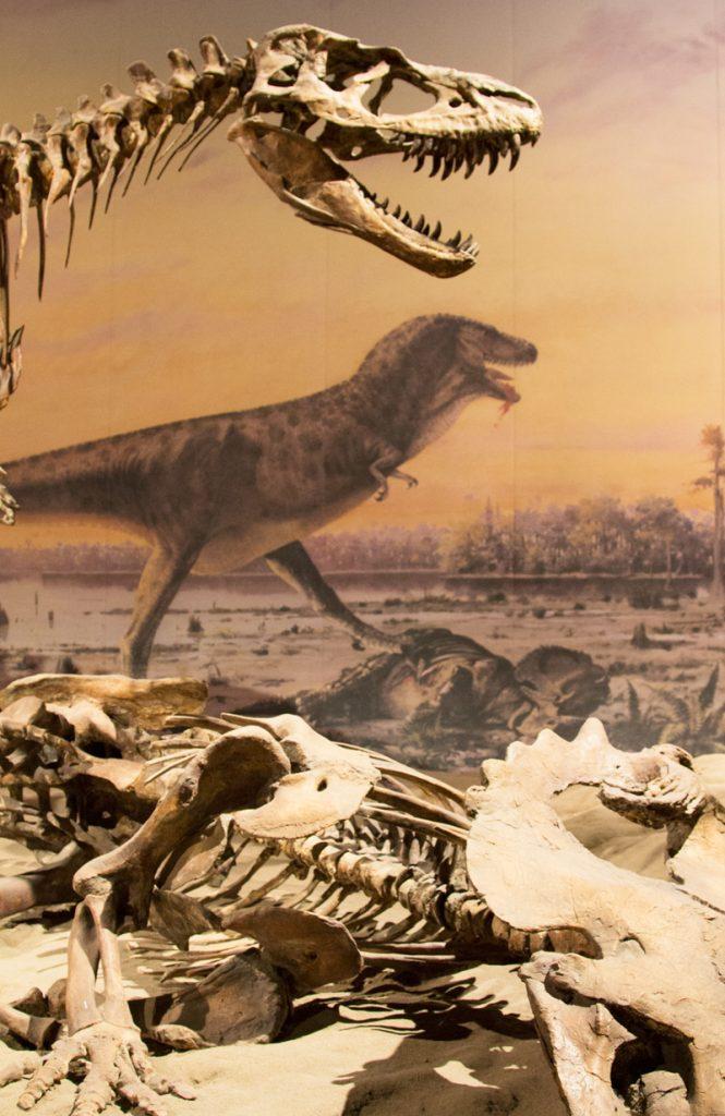 Dinosaur bones in Alberta